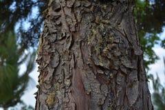 Schors van boom met sabila stock foto's