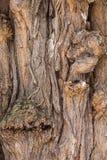 Schors van boom, textuur Royalty-vrije Stock Fotografie