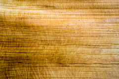 Schors van boompatroon Stock Fotografie