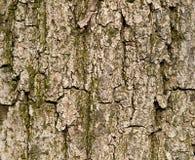 Schors van de achtergrond van de boomtextuur Stock Foto's