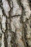 Schors van de boom Stock Afbeelding