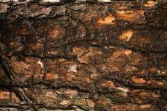 Schors van de boomachtergrond van de Pijnboom Royalty-vrije Stock Foto's