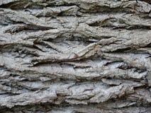 Schors van de Europese eiken boom stock afbeelding