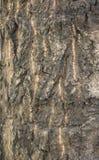 Schors van de oude de boomstamachtergrond van boom grote diepe barsten Stock Afbeeldingen