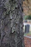 Schors van de de textuur de houten aard van de begraafplaatsboom royalty-vrije stock fotografie