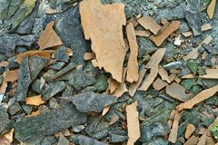 Schors van een achtergrond van de boomtextuur stock foto's