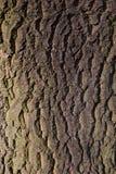 Schors van een boom royalty-vrije stock foto's