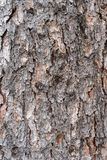 Schors van een boom stock foto