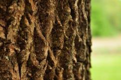 Schors van een boom Royalty-vrije Stock Fotografie
