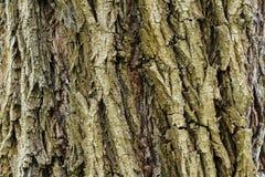 Schors van een boom Houten Textuur Houten achtergrond royalty-vrije stock afbeelding