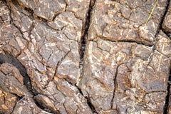 Schors van een boom met barsten stock afbeelding