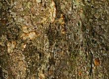 Schors van een boomboomstam Royalty-vrije Stock Foto's