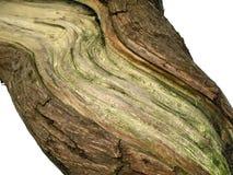 Schors van een oude boom stock foto's