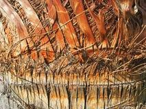 Schors van een Palm Royalty-vrije Stock Afbeeldingen