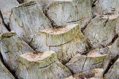 Schors van een palmachtergrond Stock Foto