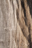 Schors van hout als achtergrond Stock Foto