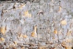 Schors van krullende berk stock foto