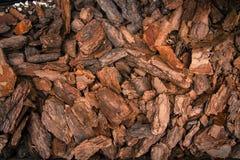 Schors van naaldboom stock foto's