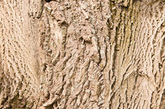 Schors van okkernootboom stock fotografie