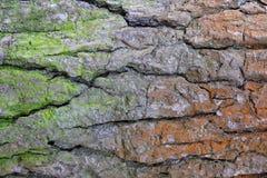 Schors van oude boom met groen en rood mos Royalty-vrije Stock Foto's