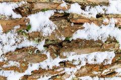 Schors van pijnboomboom met sneeuwtextuur die wordt behandeld Stock Foto