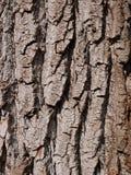 Schors van wilg, close-up Royalty-vrije Stock Foto's
