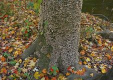 Schorspaddestoelen door een Rivier in de Herfst stock foto's
