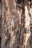 Schorspatroon van Oude boom Stock Afbeelding
