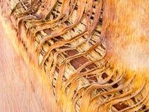 Schorstextuur van woestijnpalmen Stock Fotografie