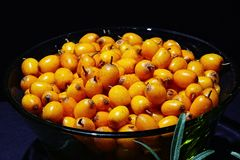 Schotel met vers geoogste seaberry stock afbeelding
