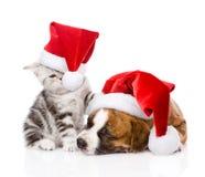 Schots katje en klein puppy met santahoed Geïsoleerde stock fotografie