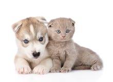 Schots katje en Siberische Schor puppyslaap samen Geïsoleerde Stock Fotografie
