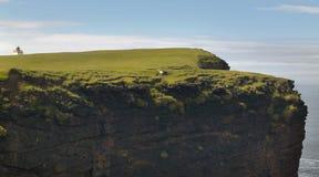 Schots kustlijnlandschap in de eilanden van Shetland schotland het UK Stock Fotografie