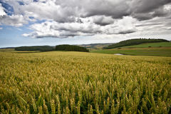 Schots Platteland stock afbeelding