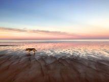Schots strand Stock Afbeelding