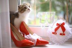 Schots vouwenkatje met bruids rode schoenen en wijnglazen op vensterbank Royalty-vrije Stock Afbeeldingen