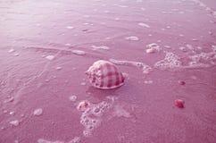 Schotse Bonnet Shell Isolate op Zandstrand met Seafoam in Pastelkleur Magenta Kleur stock afbeeldingen