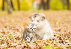 Schotse kat en hond de van Alaska van het malamutepuppy samen in de herfstpark stock foto
