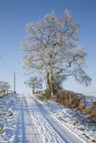 Schotse sneeuwscène royalty-vrije stock foto's