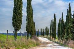 Schotterstraße mit grünen Zypressenbäumen im Frühjahr Toskana Lizenzfreie Stockbilder