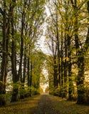 Schotterstraße von Bäumen gesäumt an einem sonnigen Herbsttag Lizenzfreie Stockfotografie