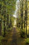 Schotterstraße von Bäumen gesäumt an einem sonnigen Herbsttag Stockfotografie