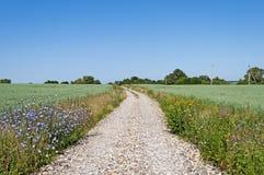 Schotterstraße zwischen grünen Feldern Lizenzfreie Stockfotos