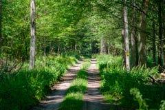 Schotterwegüberfahrt-Sommerzeitwald Stockfoto