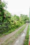 Schotterweg über einem ländlichen Haus, Wand von grünen Blättern auf einem Schotterweg lizenzfreies stockbild