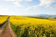 Schotterweg auf einem Bauernhof, der weg von Zuschauer führt Stockbild