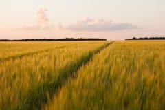 Schotterweg auf einem Weizengebiet Stockfotografie