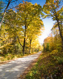 Schotterweg, der einen großartigen Wald kreuzt Stockfoto