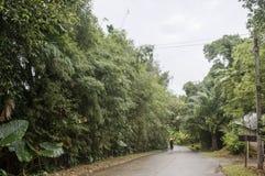 Schotterweg in der tropischen exotischen Vegetation der Wald- und der Sonneshiningrural Straße naß nach dem Regen Lizenzfreie Stockfotos