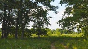 Schotterweg durch den Wald stock video